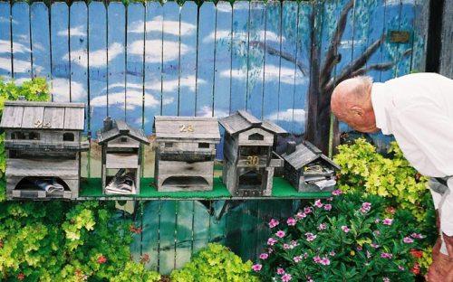alan como-mailbox-painting-flowers-um