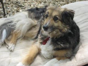My dog Jenny: Smarter than Max Baucus?